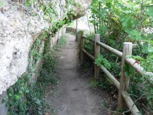 ruta botanica
