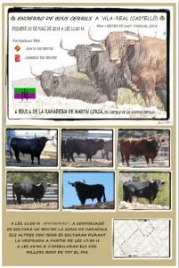 Vila-real tendrá un encierro de toros cerriles en las fiestas de Sant Pasqual