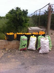 La Policía Rural recupera 172 cajas de naranjas sustraídas en una nave de Vila-real