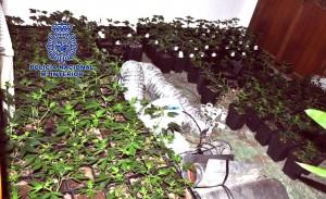Detenidas cuatro personas en Vila-real y Castellón por el cultivo de cannabis