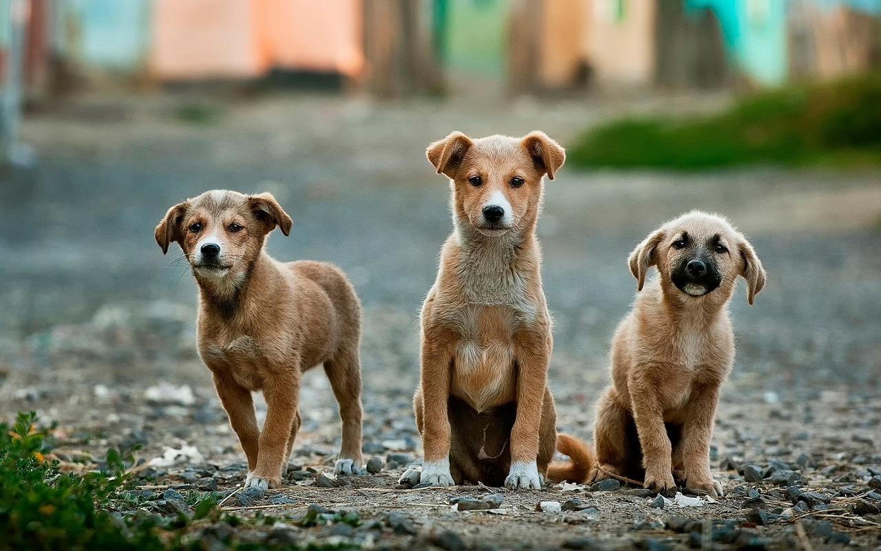 Veterinaria Raquel Trigueros: ¿cachorro o perro adulto?