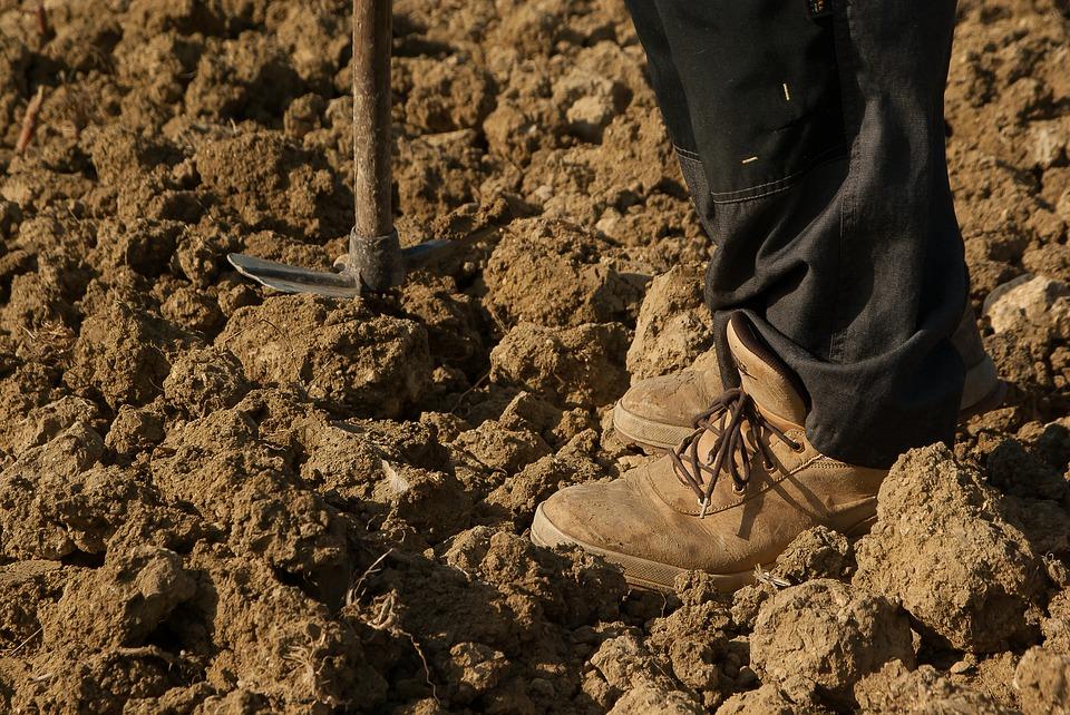 Vila-real contratará a 74 trabajadores agrícolas este verano