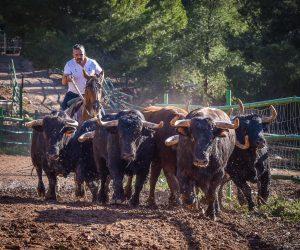 Entrevista al ganadero de Borriol, Daniel Ramos