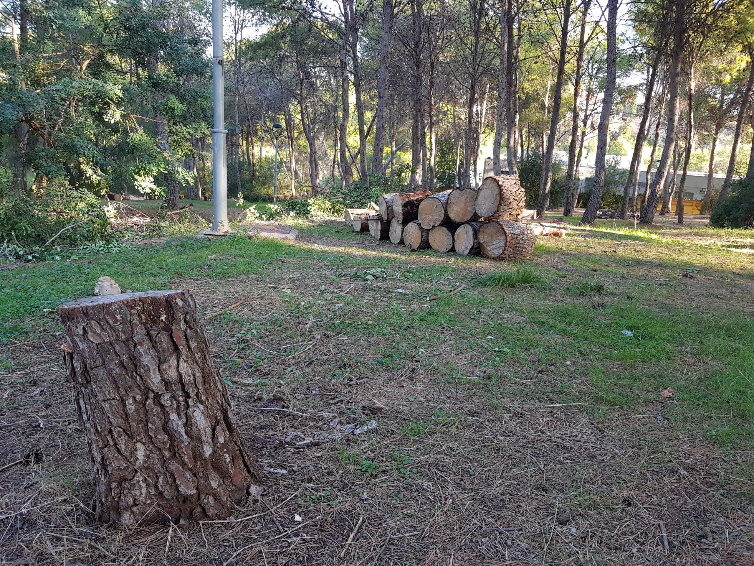 El servicio de mantenimiento del Consorcio río Mijares retira del paraje del Termet los pinos caídos y afectados por la plaga del 'Tomicus destruens'
