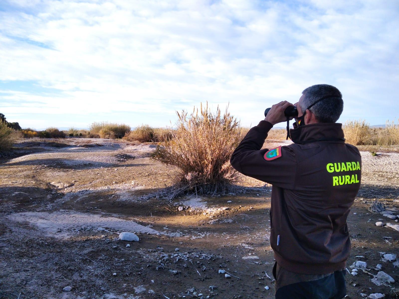 El Consorcio gestor del Paisaje Protegido de la Desembocadura del río Mijares participa en el censo invernal de aguilucho lagunero en las zonas húmedas de la Comunidad Valenciana