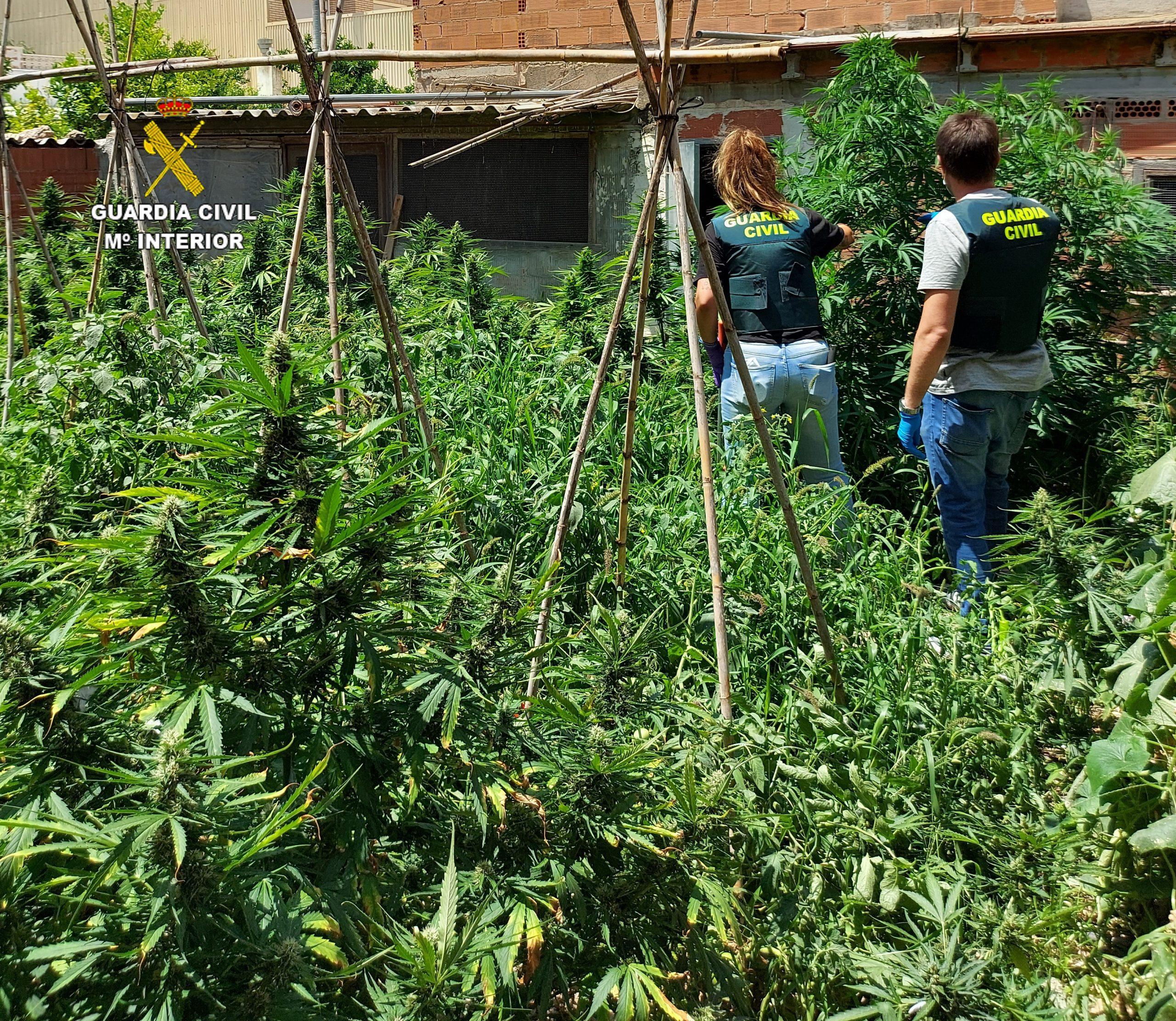 La Guardia Civil incauta cinco armas de fuego y desmantela una plantación de marihuana en Benicarló