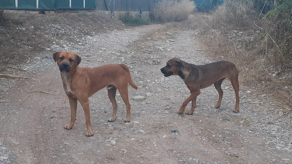 El Consorcio gestor del Paisaje Protegido de la Desembocadura del río Mijares recuerda la prohibición de llevar perros sueltos