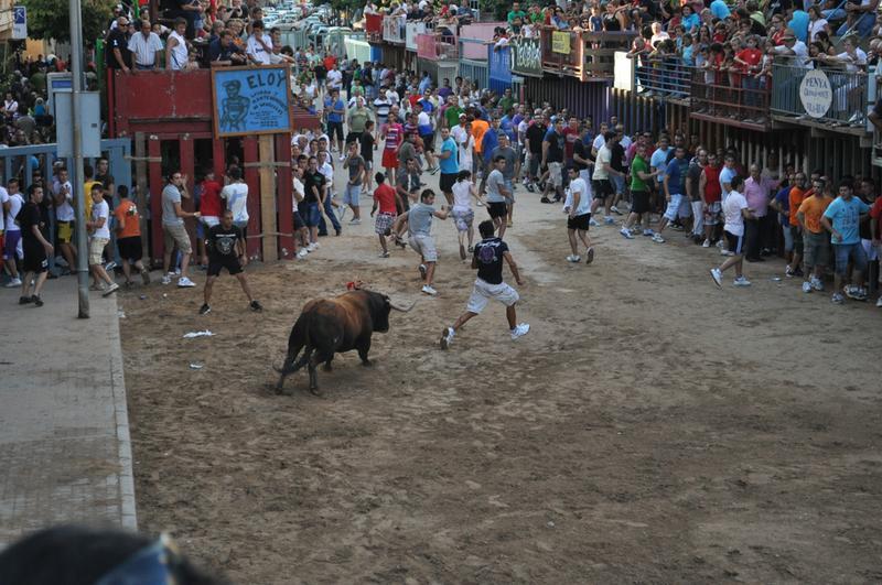 Conoce el origen de «els bous al carrer» en Vila-real con Santi Cortells
