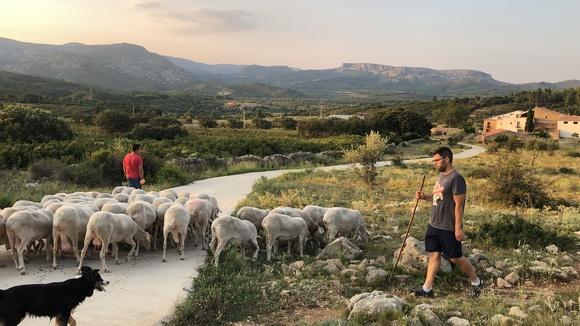 Compromís: «España castiga a las zonas rurales con 1 Mbps, lo que impide el desarrollo digital»