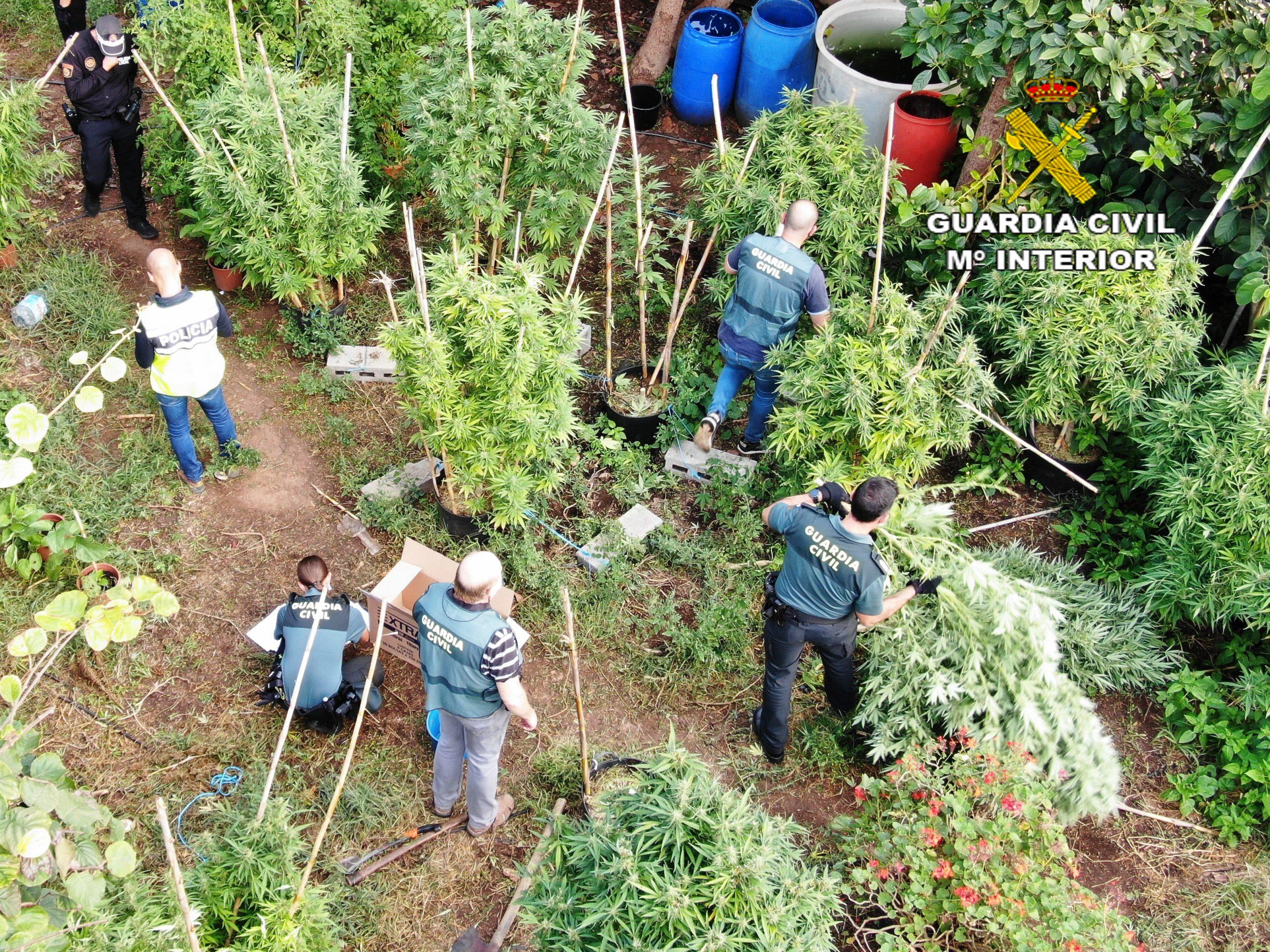 La Guardia Civil y la Policía Local detienen a una persona por un delito de cultivo, elaboración y tráfico de drogas en Onda